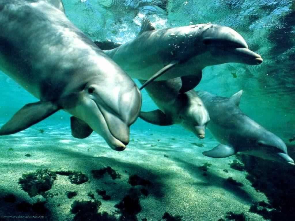 Los científicos produndizan sobre extraordinaria inteligencia de los delfines