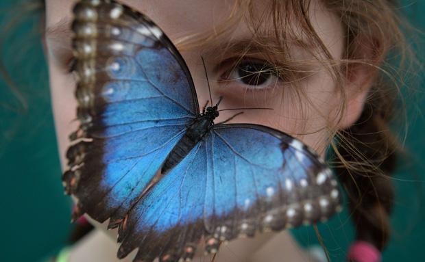 Museo Británico Libero Cientos de Mariposas para interactuar y conocer sobre ellas