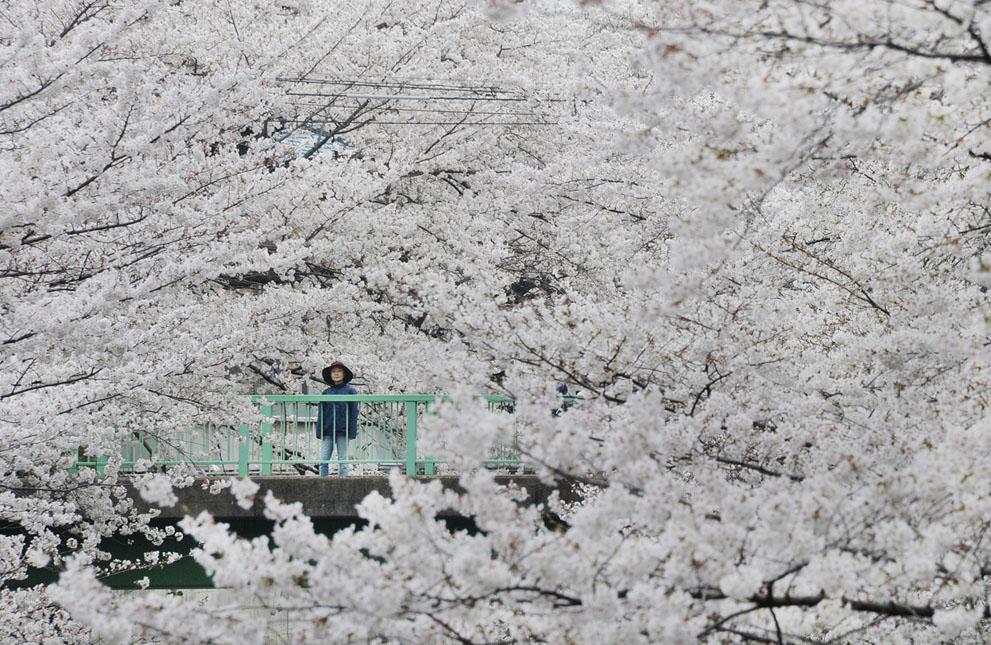 Primavera en el hemisferio norte: impresionantes y emotivas imagenes