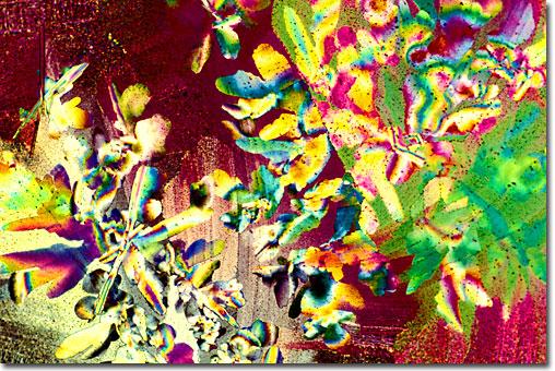 Arte bajo el Microscopio