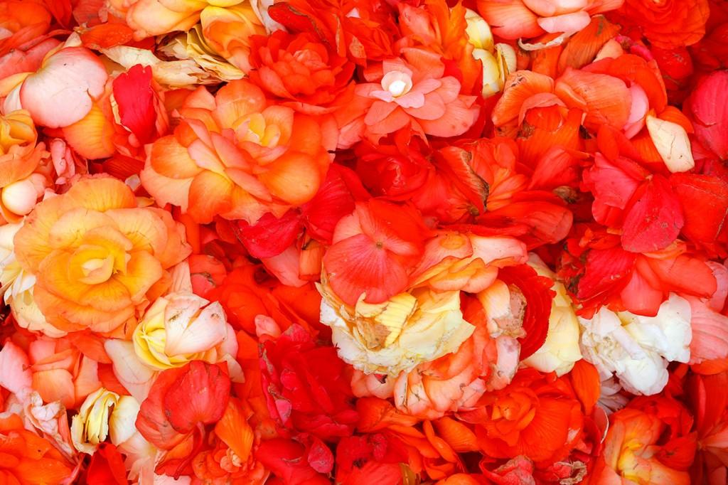 brussels-grand-place-flower-carpet-2014 (3)