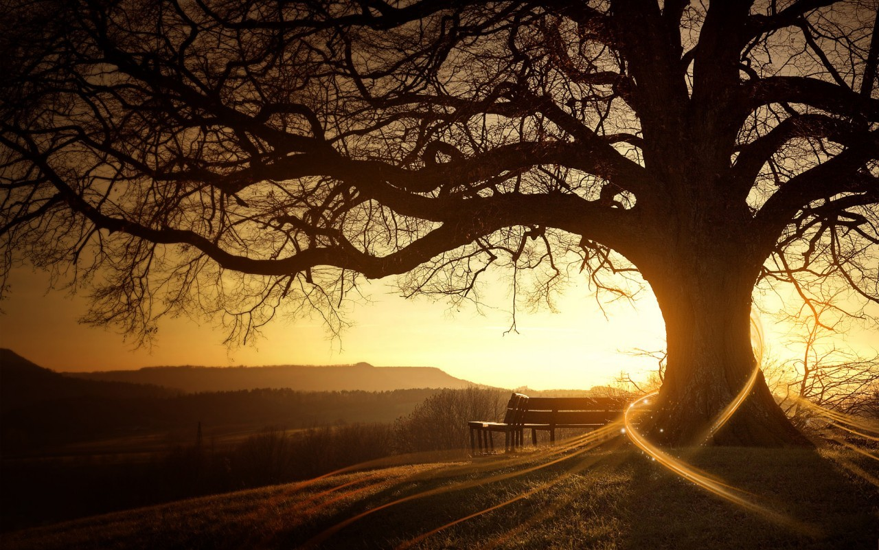 Las 14 especies de árboles que al abrazarlos sanan diversas partes del cuerpo