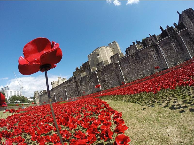 Millones de Amapolas  simbolizan la muerte de todos los soldados británicos en la Primera Guerra Mundial