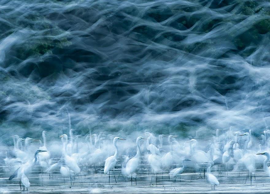 Volviendo al pasado, con increíbles fotografías de uno de los miles de concursos de National Geographic