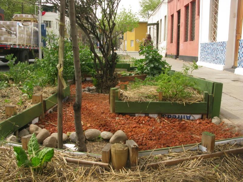 Planta Banda