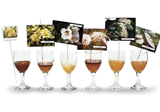 La miel chilena podría convertirse en producto estrella del botiquín