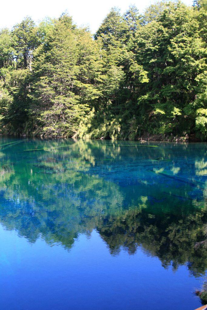 Bienvenidos al reino encantado del Pehuén El Parque Nacional Conguillío