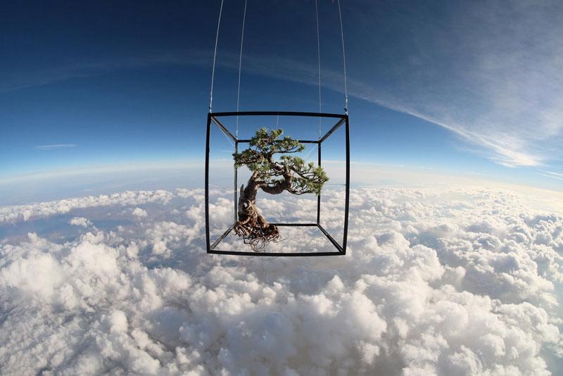 azuma-makoto-sends-bonsai-plant-into-space-1