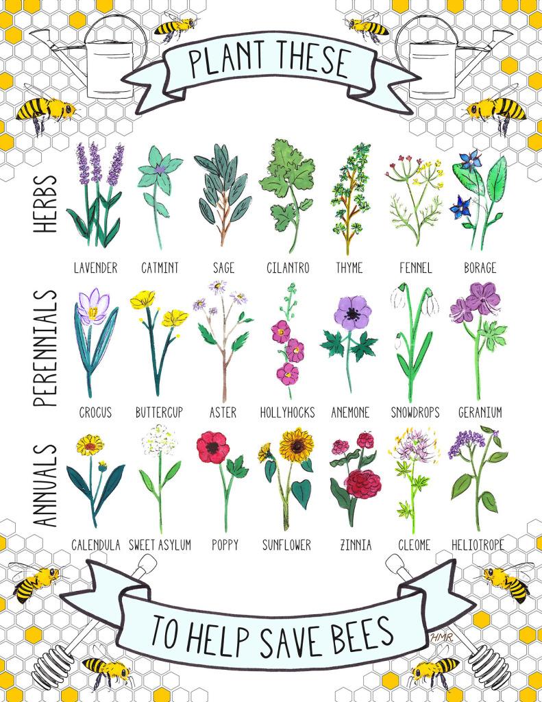 Ayudemos a las abejas sembrando las siguientes plantas en nuestro jardín