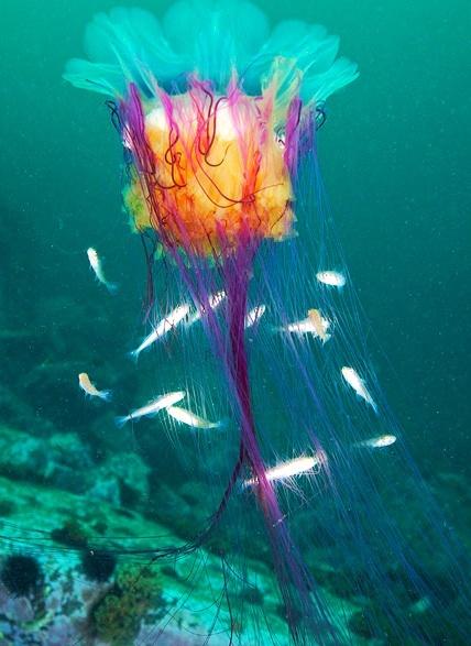 Las maravillosas flores que se esconden en el  fondo del mar