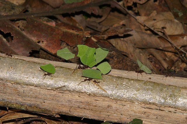 Ecuador Selva Amazonas