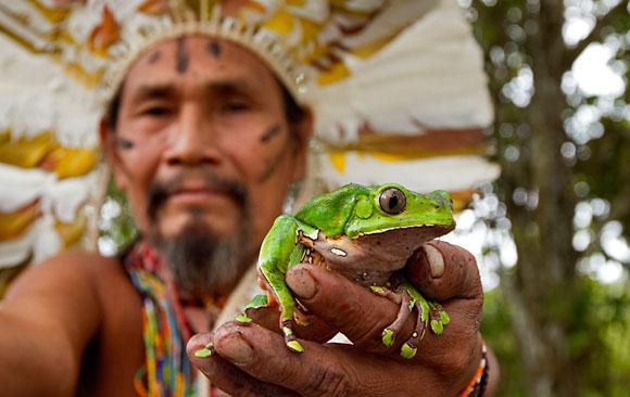 """El Kambó, la """"medicina"""" que hace milagros con el sudor de una rana"""