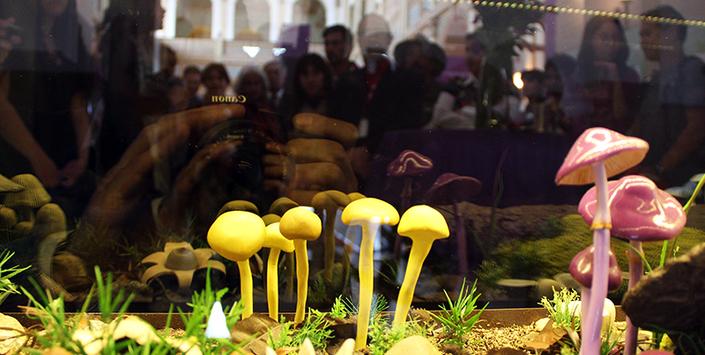 exposicion de hongos