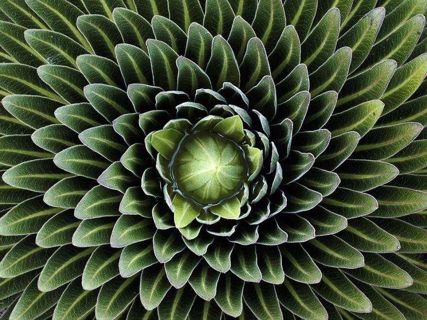 La perfecta geometría de la naturaleza