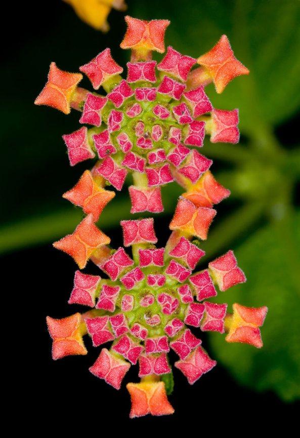 6-flores-hermosas-a-la-vez-que-curiosas