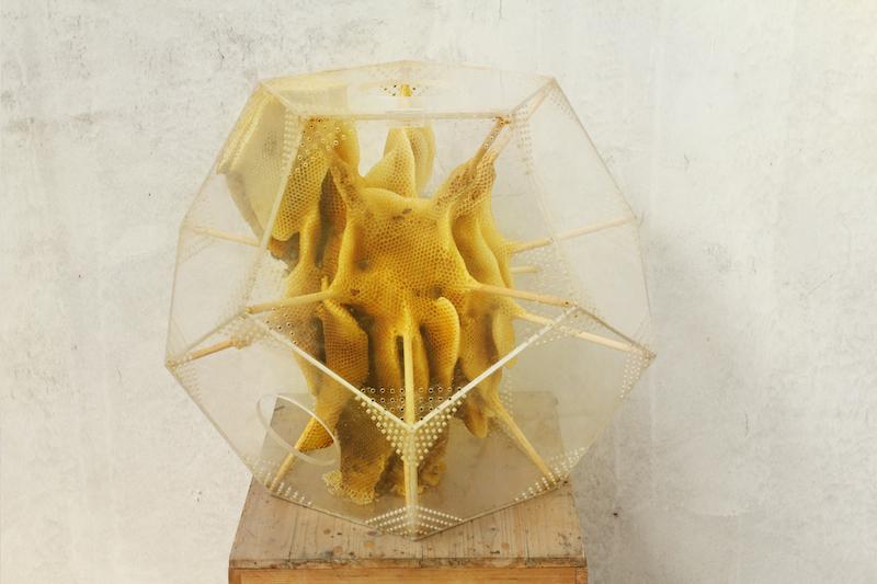 Esculturas vivas creadas por abejas junto al artista Ren Ri