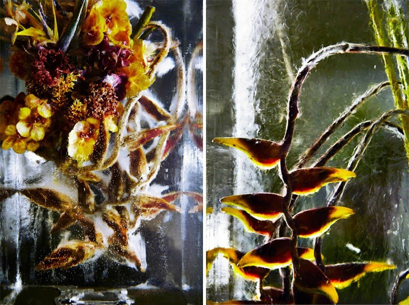 Iced Flowers_Azuma Makoto_Cultura Inquieta-10