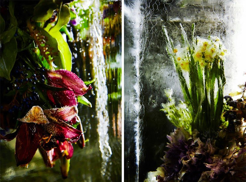 Iced Flowers_Azuma Makoto_Cultura Inquieta-9