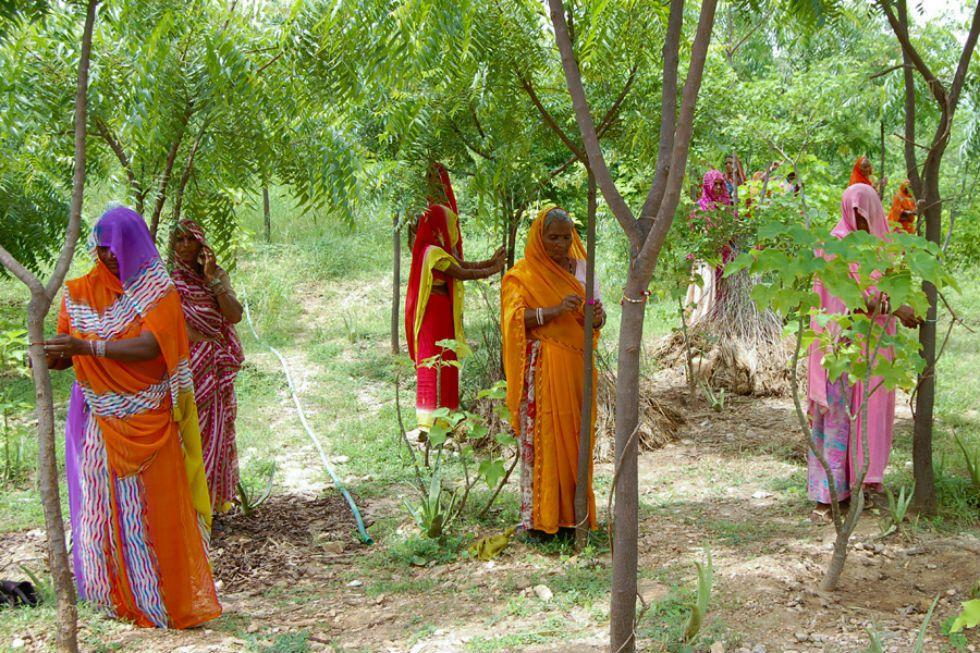 Mujeres de Piplantri anudan cordeles a los árboles como símbolo de hermandad con la naturaleza.