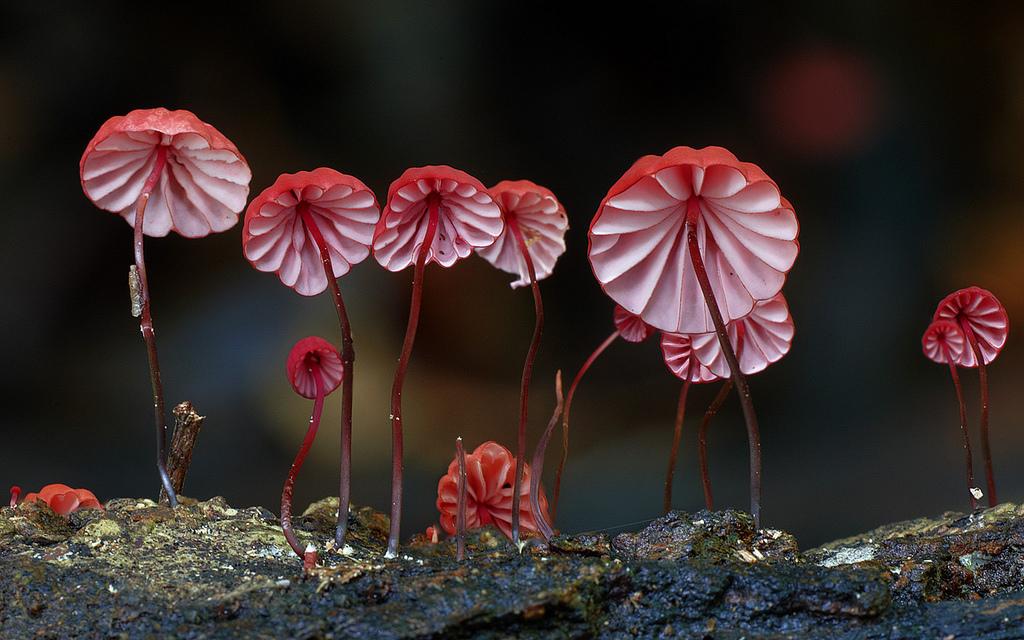 Increíbles hongos capturados por Steve Axford