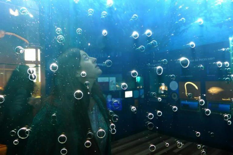 El bello mundo que esconde el Museo de Historia Natural de Valparaíso