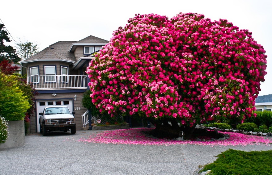 Laincreíble, asombrosa eincomparable belleza de los arboles