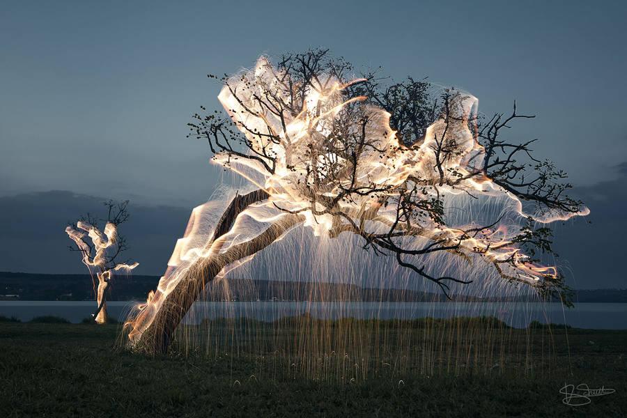 Vitor Schietti pintando con luz la naturaleza