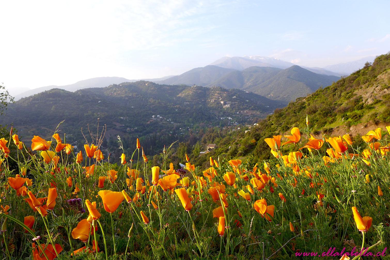 La Invasión de Dedales de Oro en los cerros de Santiago