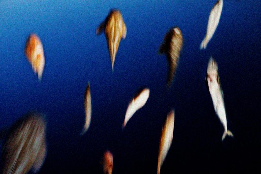 la-ira-dels-peixos
