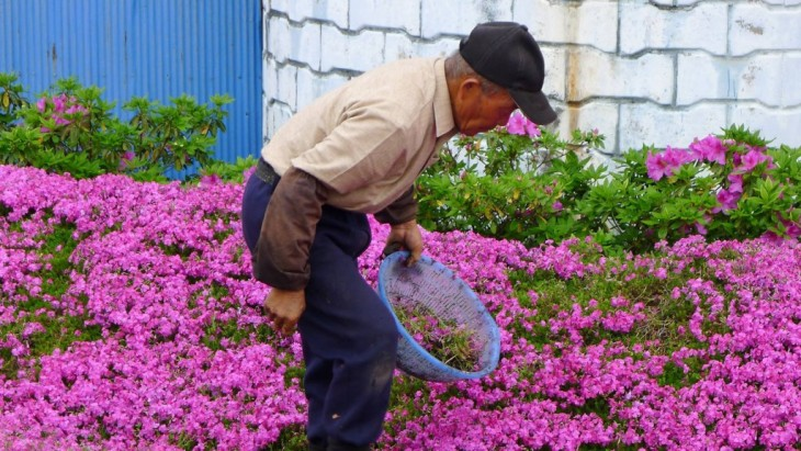 El Hombre que plantó un jardín aromático para su esposa ciega