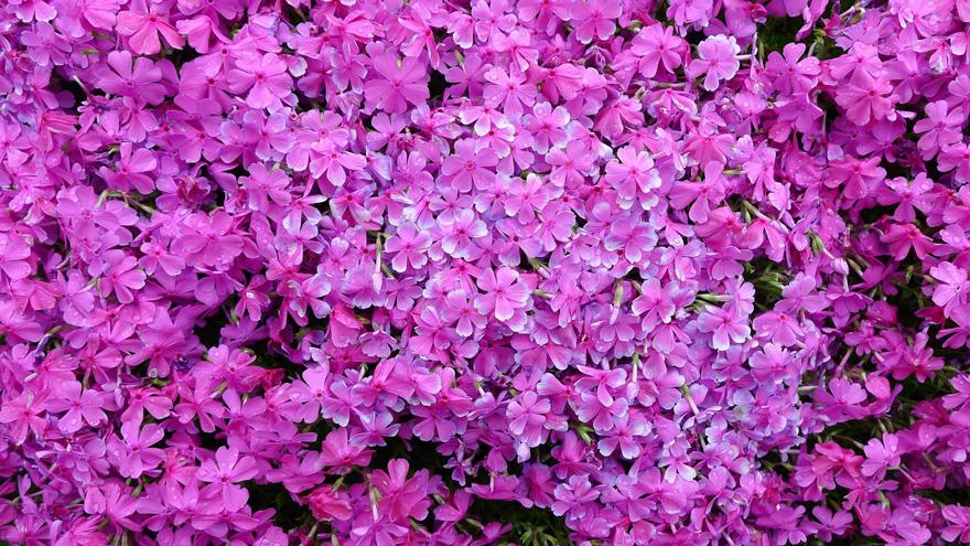 husband-plants-flowers-blind-wife-kuroki-shintomi-15