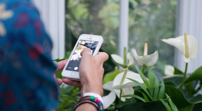 Shazam para plantas: App permite identificar una planta sólo tomando una foto