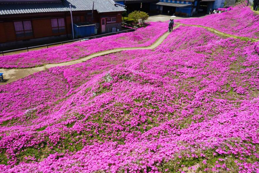 marido-planta-flores-esposa-ciega-kuroki-japon-9