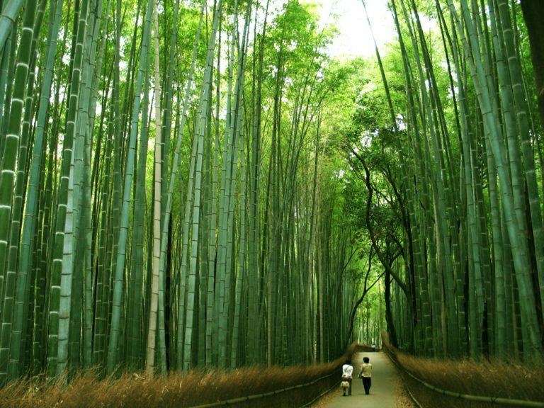 Hermosa metáfora sobre prepararse para la vida como lo hace el Bambú