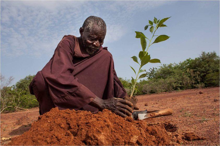 La increíble historia de Yacouba Sawadogo, el hombre que frenó el desierto