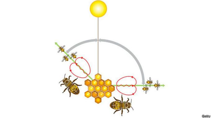 abejas-bbc-6