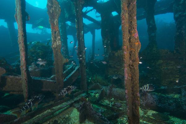 Chile Bajo el Mar