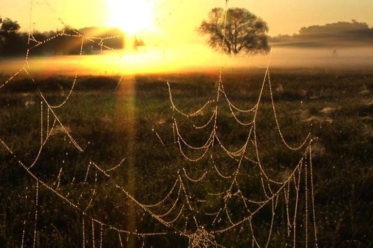 """""""El canto de los árboles"""", una muestra sobre fenómenos sobrenaturales"""