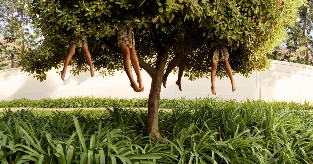 ellenkooi-lissabon-tree
