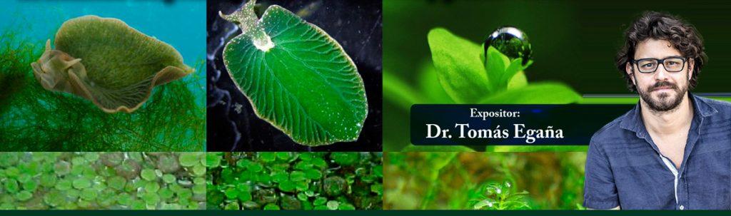 seminario-st-homo-fotosintetica-tomas-egana