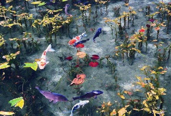 Estanque parece un verdadero cuadro impresionista de Claude Monet