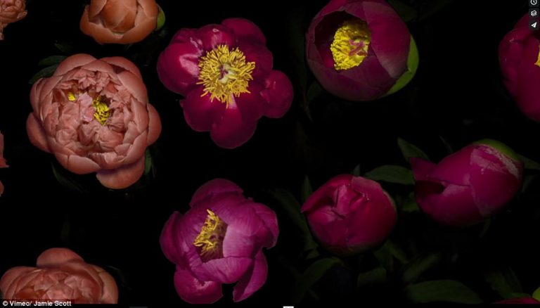 """""""Spring"""" un increíble Time-lapse que capta la esencia de las flores y sus delicados movimientos"""