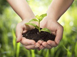 tareas-de-jardineria-para-realizar-en-marzo-2