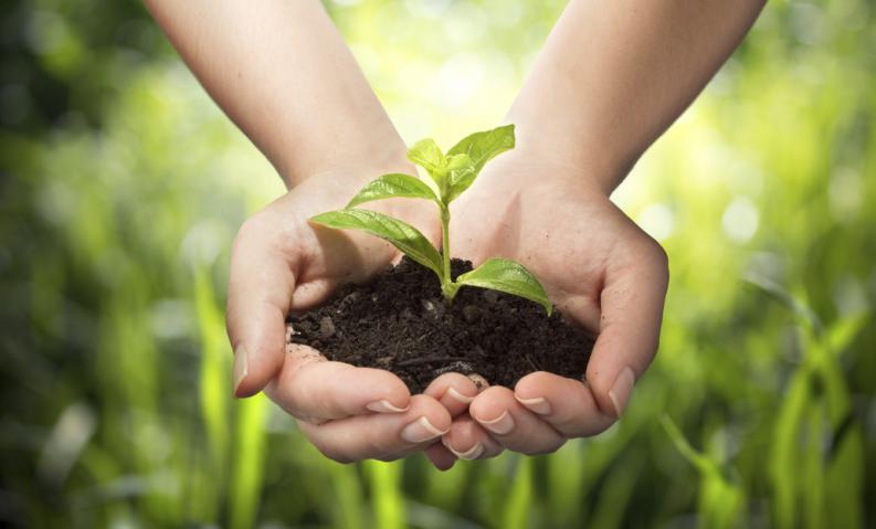 """""""Las plantas tienen nuestros cinco sentidos y quince más"""""""