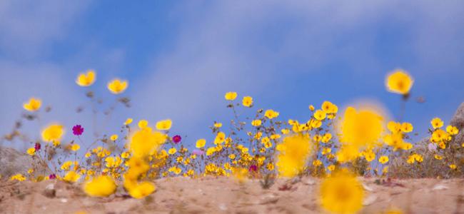Desierto_florido