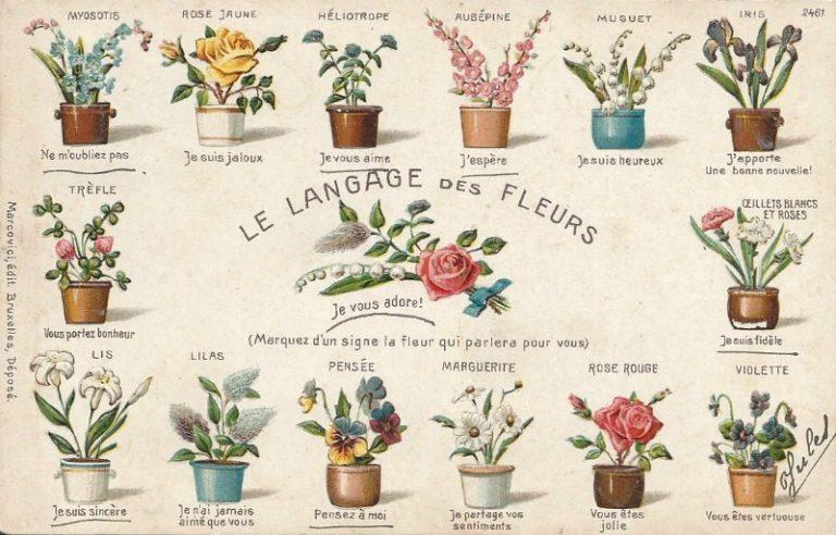 """""""Floriografía"""" El Lenguaje de las Flores"""