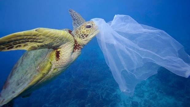 Chile es el primer país de América en prohibir las bolsas plásticas en la costas