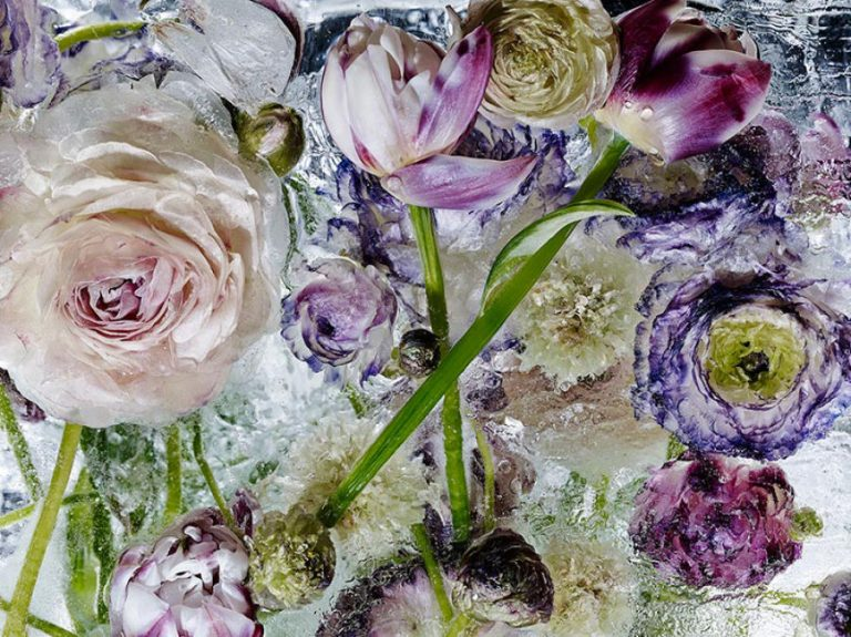 «Locking in the Eter» bellas  imagenes de flores congeladas por Kenji Shibata