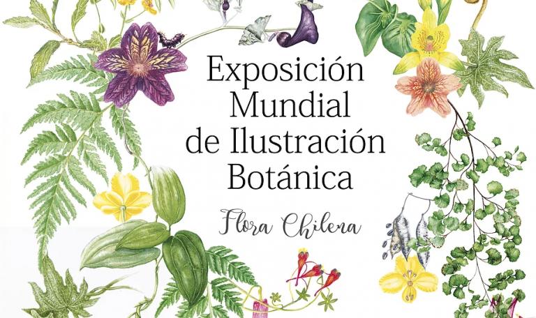 """Exposición mundial de ilustración Botánica """"Flora Chilena"""""""