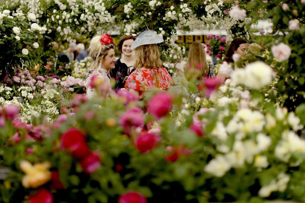 «Chelsea Flower Show 2018» el gran festival de flores de Gran Bretaña